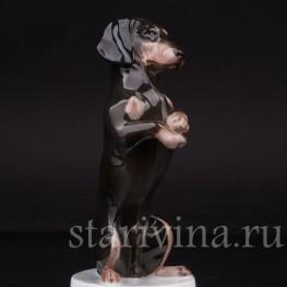 Фарфоровая статуэтка собаки Такса, стоящая на задних лапах, Rosenthal, Германия, 1924 г.